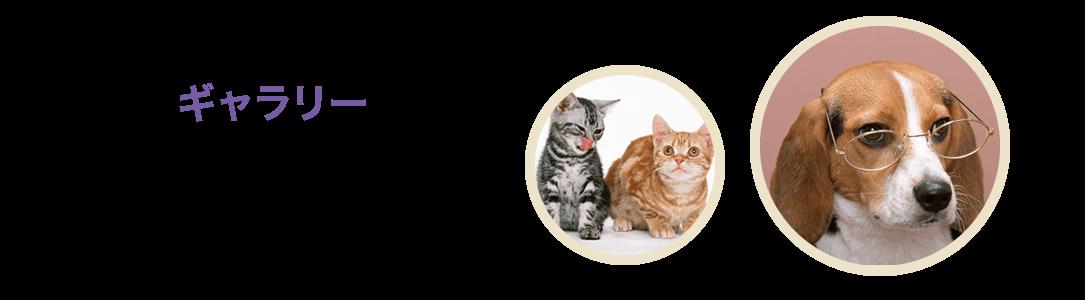 【ギャラリー】 | 動物病院 神奈川県綾瀬市 予防接種 トリミング 座間市 海老名市