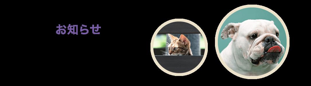 【お知らせ】 | 動物病院 神奈川県綾瀬市 予防接種 トリミング 座間市 海老名市