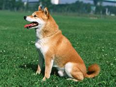 犬の関節炎について